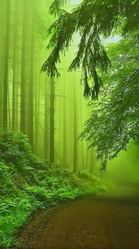 3d Green mist