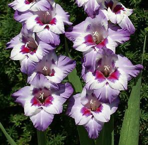 3n rare pink flower
