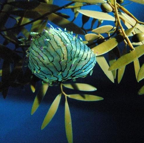 3t rare flower