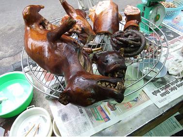 Dog roast