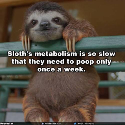 sloth poop rare