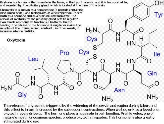 1 Oxytocin