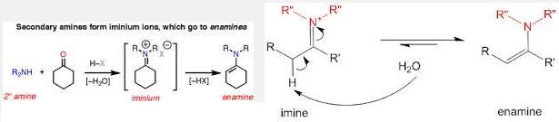 1a Secondary amine iminium anamine imine