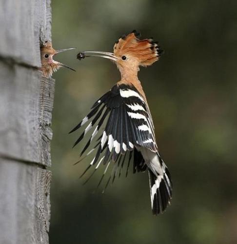 Feeding the baby bird