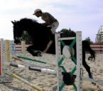 HorseJumping1