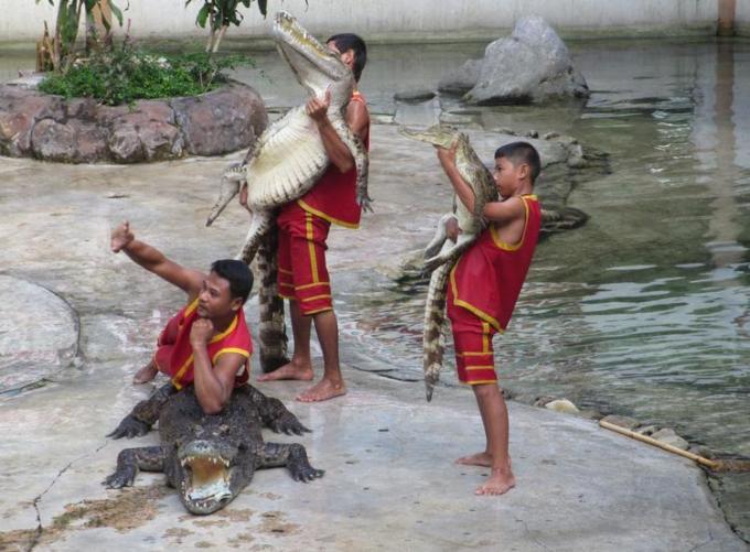 3 jon crocodile dhoreche