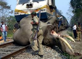 Elephant Train accident-1