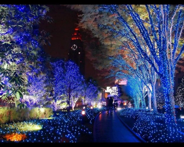 Lighted Garden