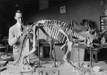 23 Paleontology
