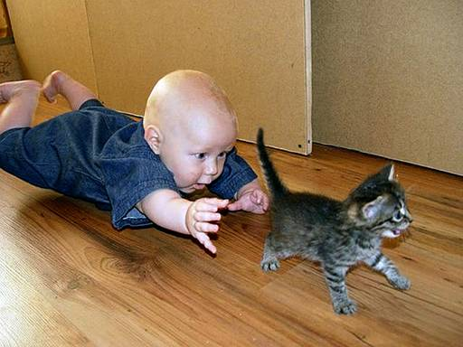 Child catching Cat