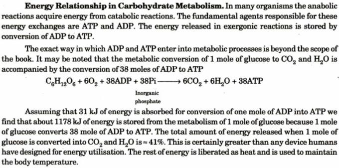 1 Energy Relationship in Carbohydrate Metabolism