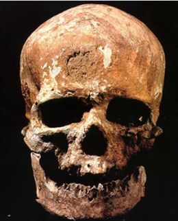 1 skull fossil