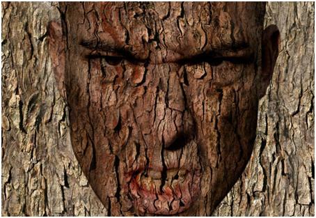 1 tree face
