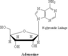 10 Adenosine