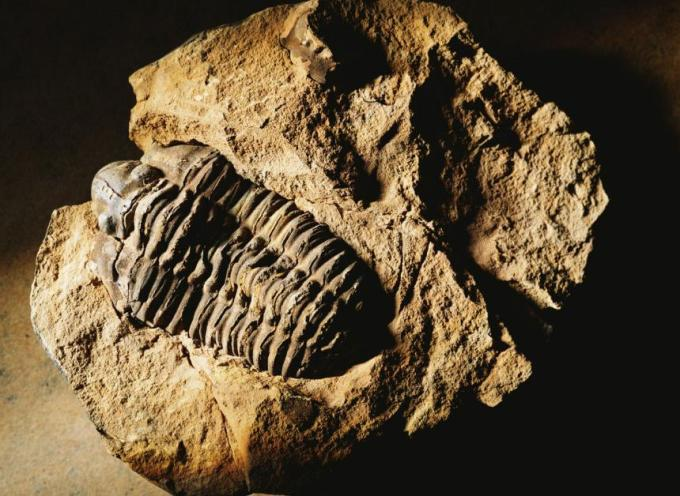 10 fossil poka