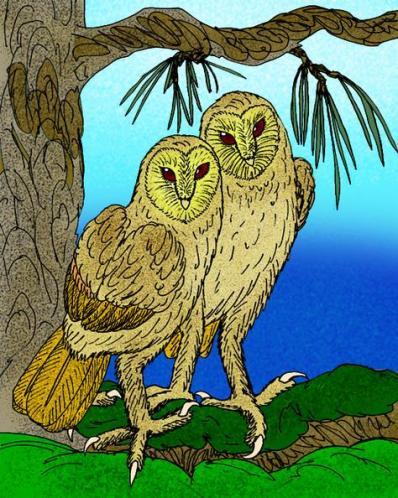 11a Owl Dompoti