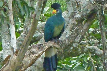 12d Green bird