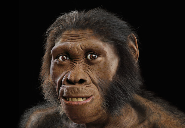 13 malapa-fossil-reconstruction