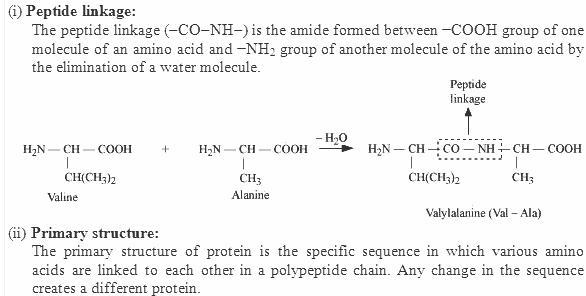 14.12-1 Ans Biomolecules CBSE