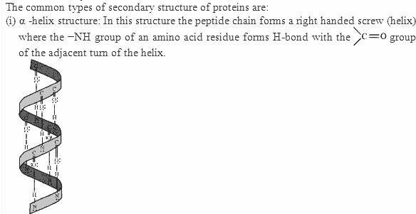 14.13-1 Ans Biomolecules CBSE