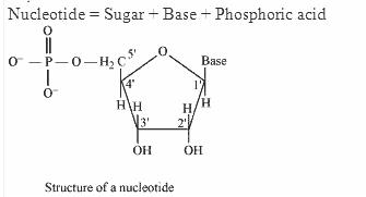 14.22-2 Ans Biomolecules CBSE