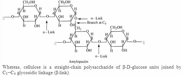 14.8-2 Ans Biomolecules CBSE Chemistry