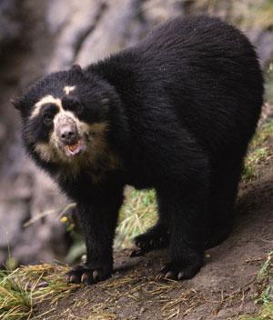 15 rare bear