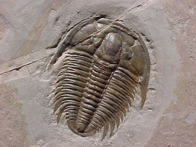 17 fossil