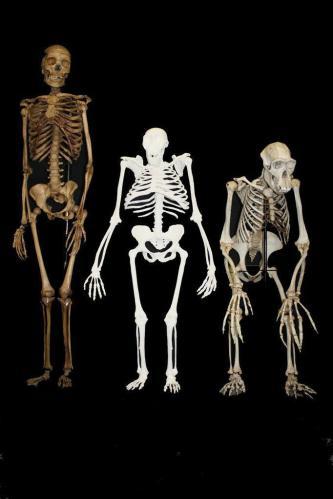 18 skeletons