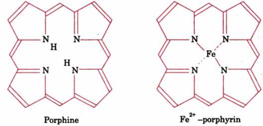 1a Porphine