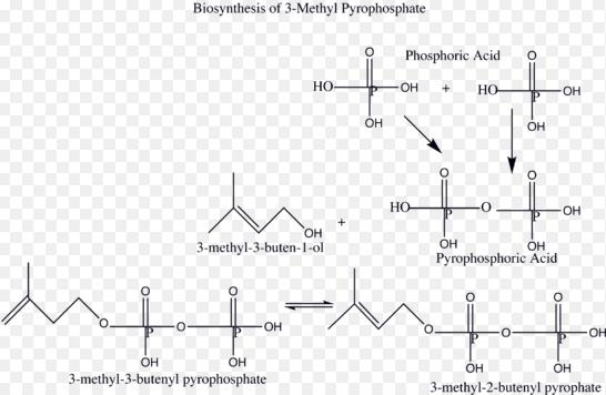 1d Biosynthesis of 3 methyl pyrophosphate