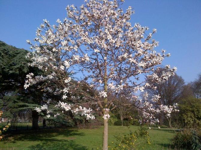 1d White flower tree