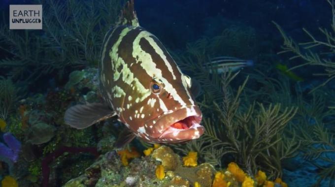 1h Strange beautiful fish