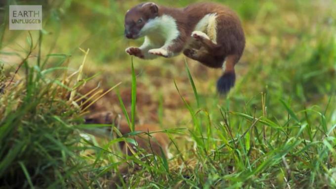 1m Dancing jumping animal