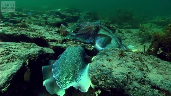 1v Under water exotics