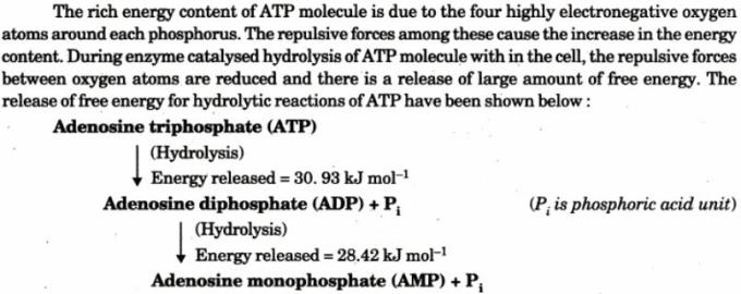 2 ATP is energy rich molecule