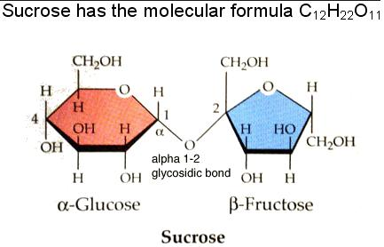 2 Sucrose has Alpha glycosidic bonds