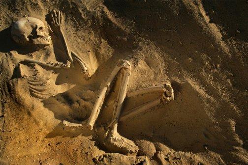 23 fossil human