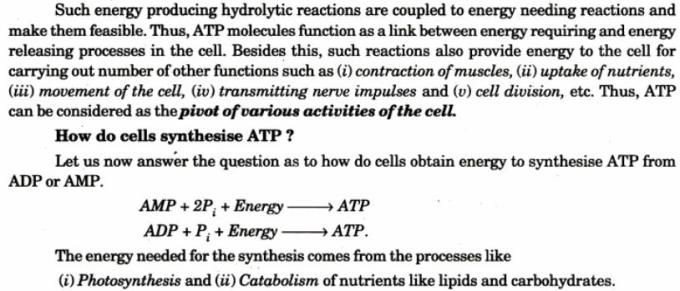 3 ATP is energy rich molecule