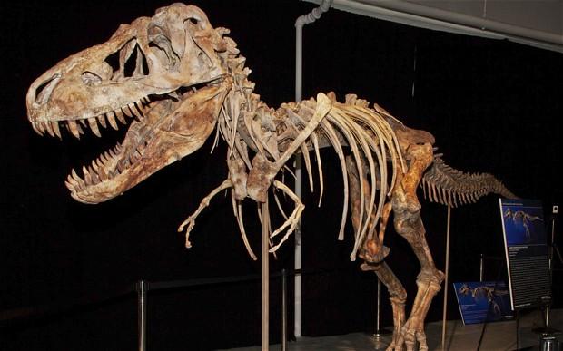 3 Dinosaur skeleton