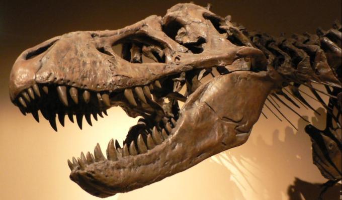 3 Palais de la Decouverte Tyrannosaurus rex