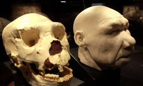 3 skull fossil