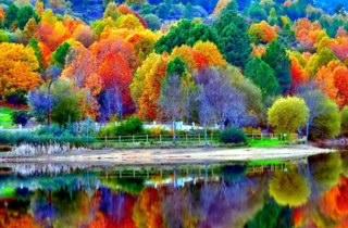 31a Colourful trees