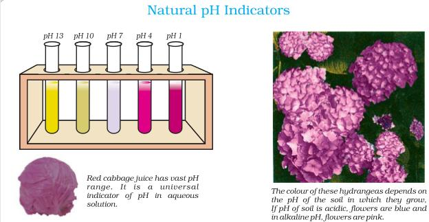 31a Natural pH indicators