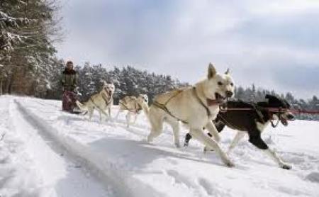31c Dog sledge