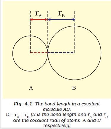 31m Radius of atom