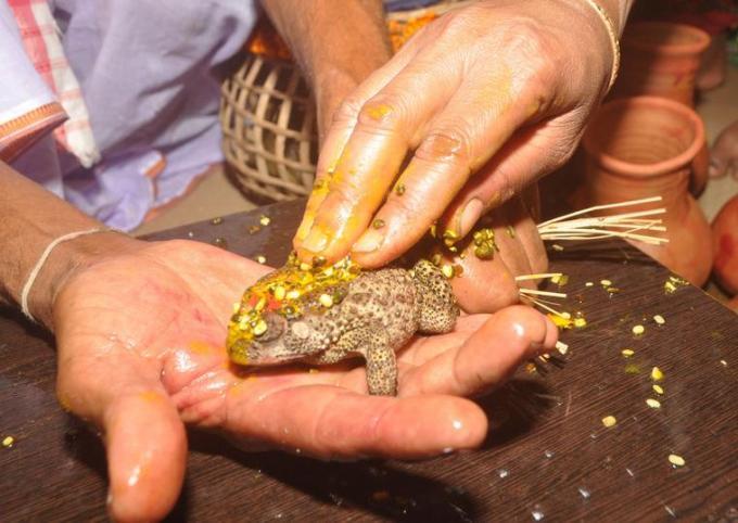 32j Frog wedding