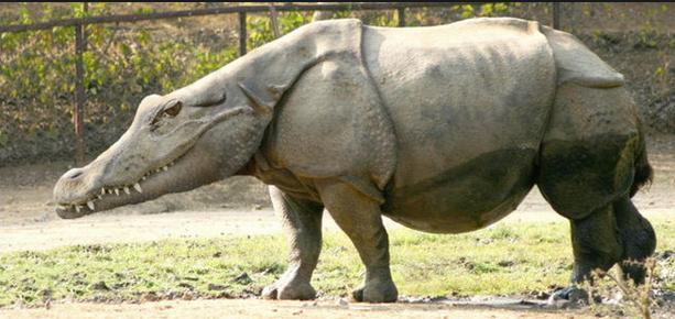 36a Hippo crocodile