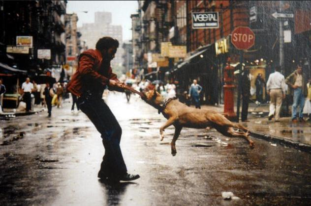 3a Violent Dog