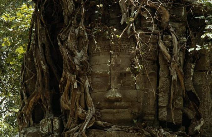 4 Tree er modhdhe Budhdha
